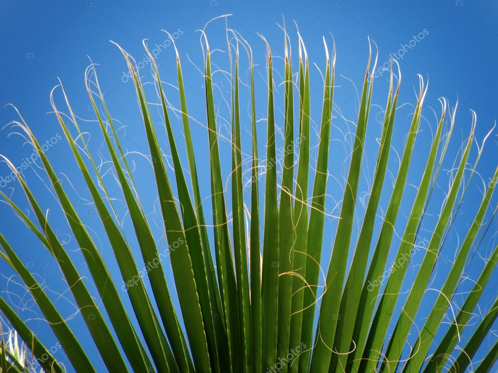 Symmetrical palm leaf against blue sky — Stock Photo #2414193