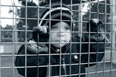Serious child looking through fence — Stock Photo