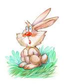 Funny hare — Stock Photo