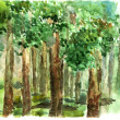 Shady grove watercolor — Stock Photo