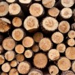 Detail of a Timber background — Stock Photo