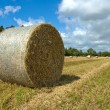 Wheat hay bale - Stock Photo