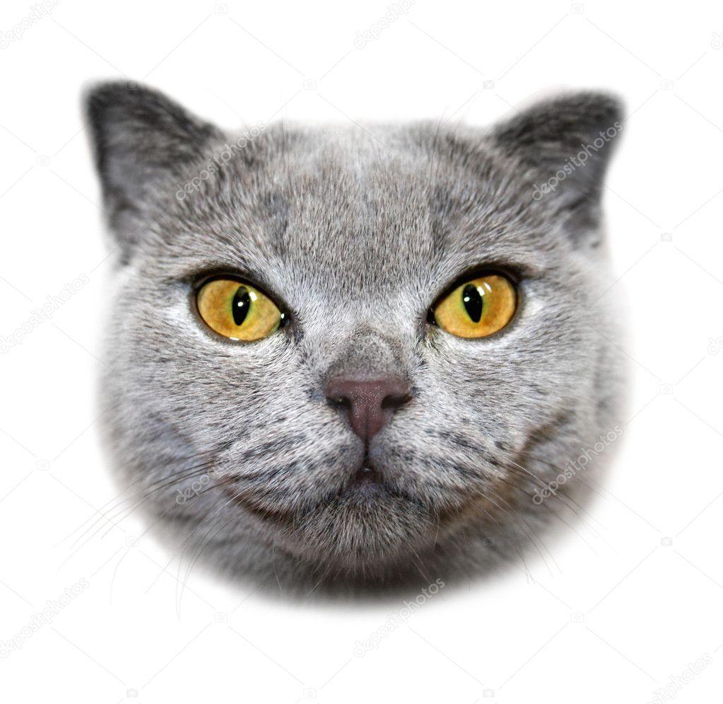 Морда кота png 6