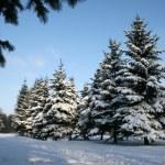 vintern landskape — Stockfoto