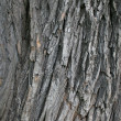 Royalty-Free Stock Photo: Bark of a tree