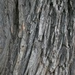 Bark of a tree - Stock Photo