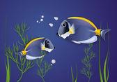 Surgeonfish. — Stock Photo