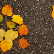 Autumn leaves on tarmac — Stock Photo