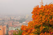 Autumn leaves in a foggy day — Stock fotografie