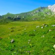 Stock Photo: Mountain meadow with many flowers