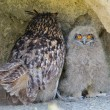 Stock Photo: Chick and adult eagle owl (bubo bubo)