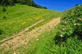 Mountain landscape with dog rose — Stock Photo