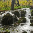 Small waterfall in deciduous forest — Stockfoto #2393257