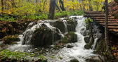 Small waterfall in deciduous forest — Stockfoto