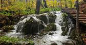 在落叶森林里的小瀑布 — 图库照片