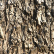 Bark #1 — Stock Photo #2444005