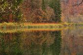 Bladverliezende wouden in de herfst — Stockfoto