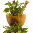 Herbs - Stock Photo