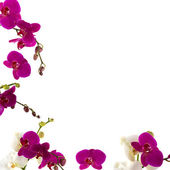 Orchid grens — Stockfoto