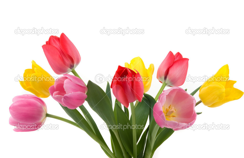 Beautiful colorful tulips — Stock Photo #2219172