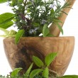 Herbs and Spices - 图库照片