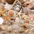 Stock Photo: Seashell Background