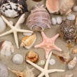 Royalty-Free Stock Photo: Seashell Background