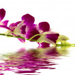 Stock Photo: Purple orchid