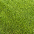 Grass — Stock Photo #2224889