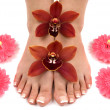 Orchids and Feet — Stock Photo #2225468