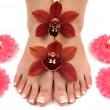 Orchids and Feet — Stock Photo