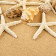 Seashell — Stock Photo #2225504