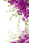 Orchideeën — Stockfoto
