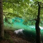 Lake Tovel in the Brenta Dolomites — Stock Photo #2369712