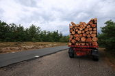 Truckload timber — Stock Photo