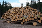 Firewood for the mountain barn — Stock Photo