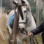 Horse — Stock Photo #2581704