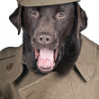 Stock Photo: Sgt Boo Shouting his Orders!