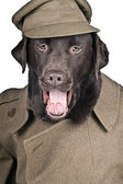 Sgt Boo Shouting his Orders! — Stock Photo