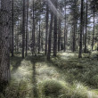Beautiful Woodland Scene — Stockfoto