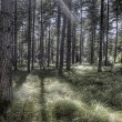 Stock Photo: Beautiful Woodland Scene