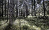 Beautiful Woodland Scene — Foto de Stock