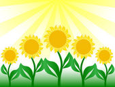 Nice sunflower in vector image — Stock Vector
