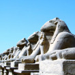 Karnak temple statue 14 — Stock Photo