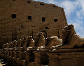 Karnak temple with sphinxes — Stock Photo