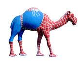 Spin kameel — Stockfoto
