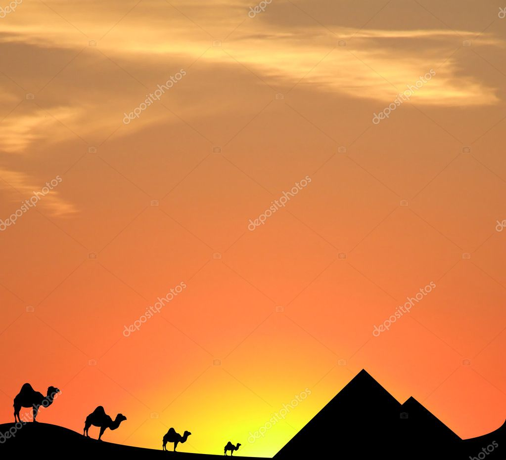 Camels, pyramids and sand dunes silhouetted against the egyptian sunset sky — Foto Stock #2252315