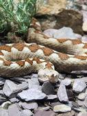 Wild snake 04 — Stock Photo