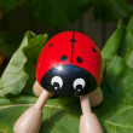 Ladybug 03 — Stock Photo #2302341