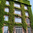 Ivy covered building 01 — Stock Photo
